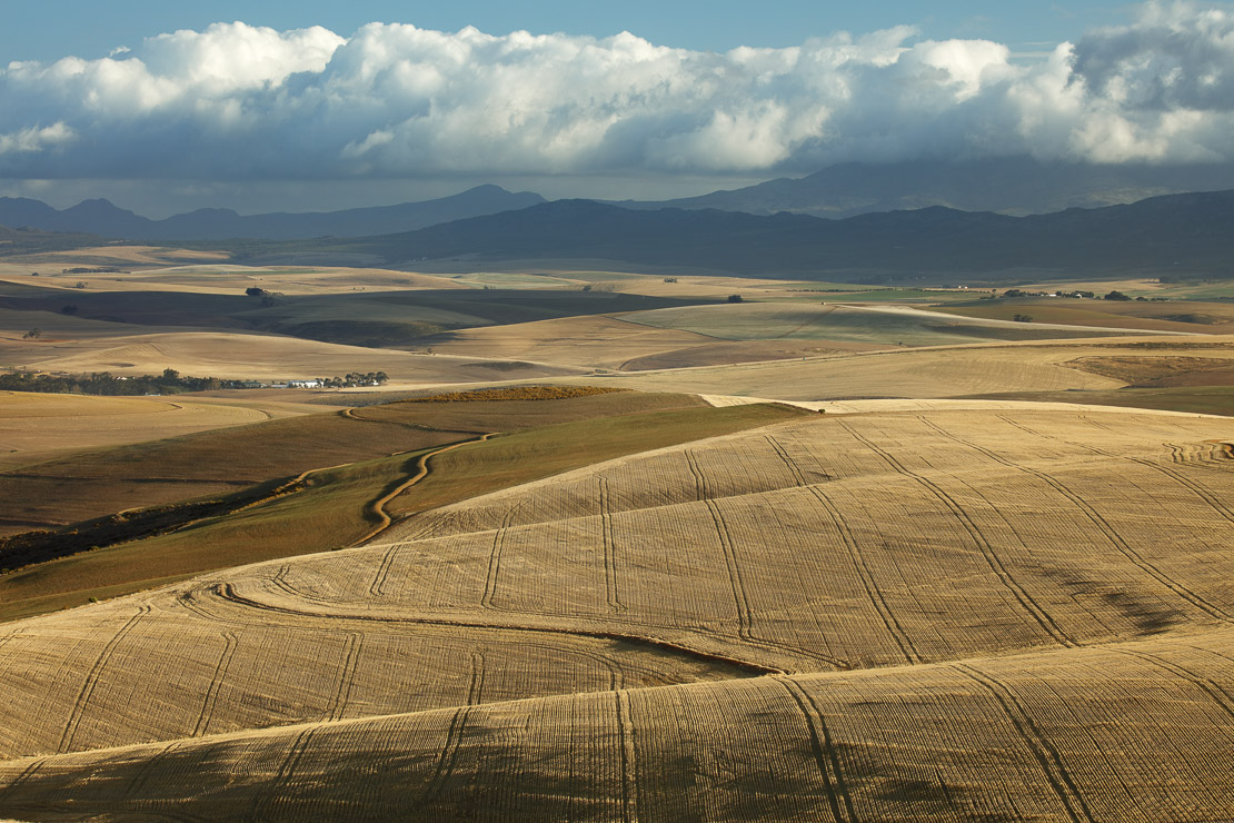 Rolling farmland in the Overberg region near Villiersdorp, Western Cape, South Africa