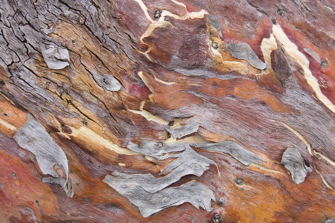 textures of bark in the Murchison River gorge at Ross Graham, Kalbarri National Park, Western Australia