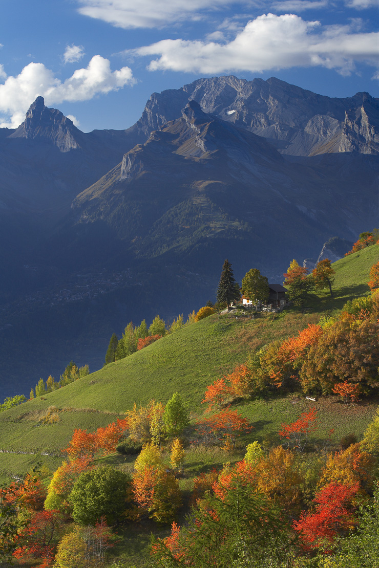 autumn colours at Iserables above the Rhone Valley nr Sion, la Valais, Switzerland. (NR)