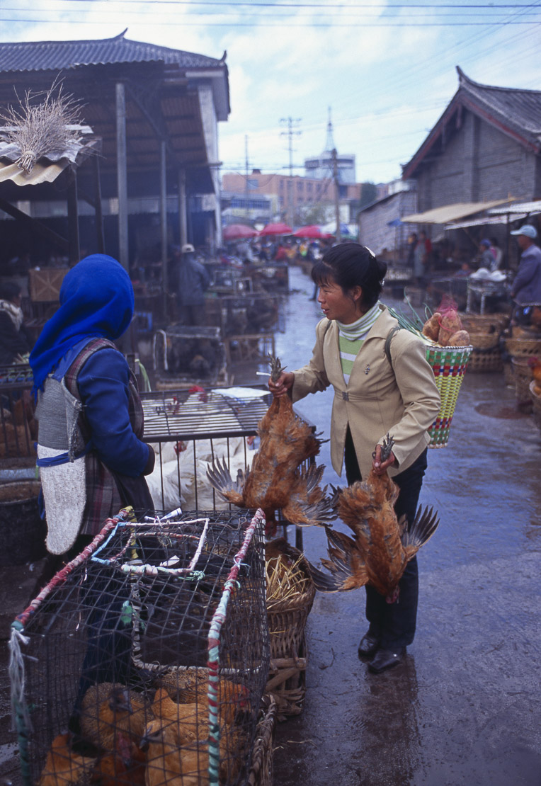 Chinese woman buying live chickens at market, Lijiang, Yunnan Province, China