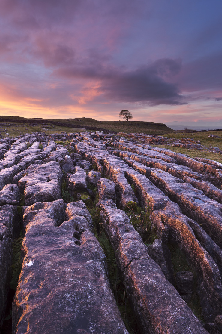 a limestone pavement on Malham Moor at dawn, Yorkshire Dales, England, UK