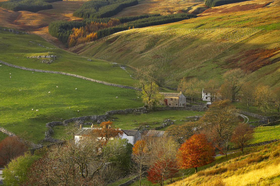 autumn colours at Arncliffe, Littondale, Yorkshire Dales National Park, England, UK