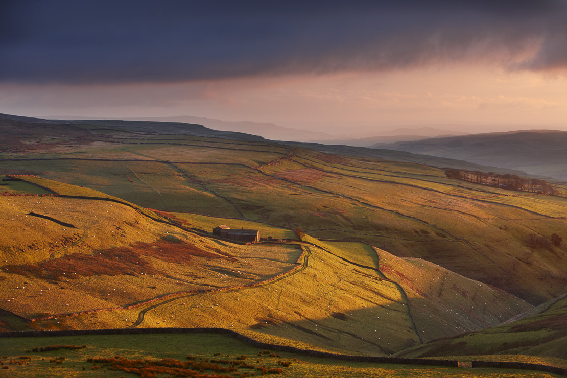 evening light on the stone walls and a farms of Wharfedale, nr Kettlewell, Yorkshire Dales National Park, England, UK