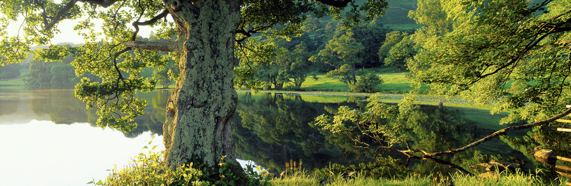 Loughrigg Tarn in summer, nr Ambleside, Lakes District National Park, Cumbria, England, UK
