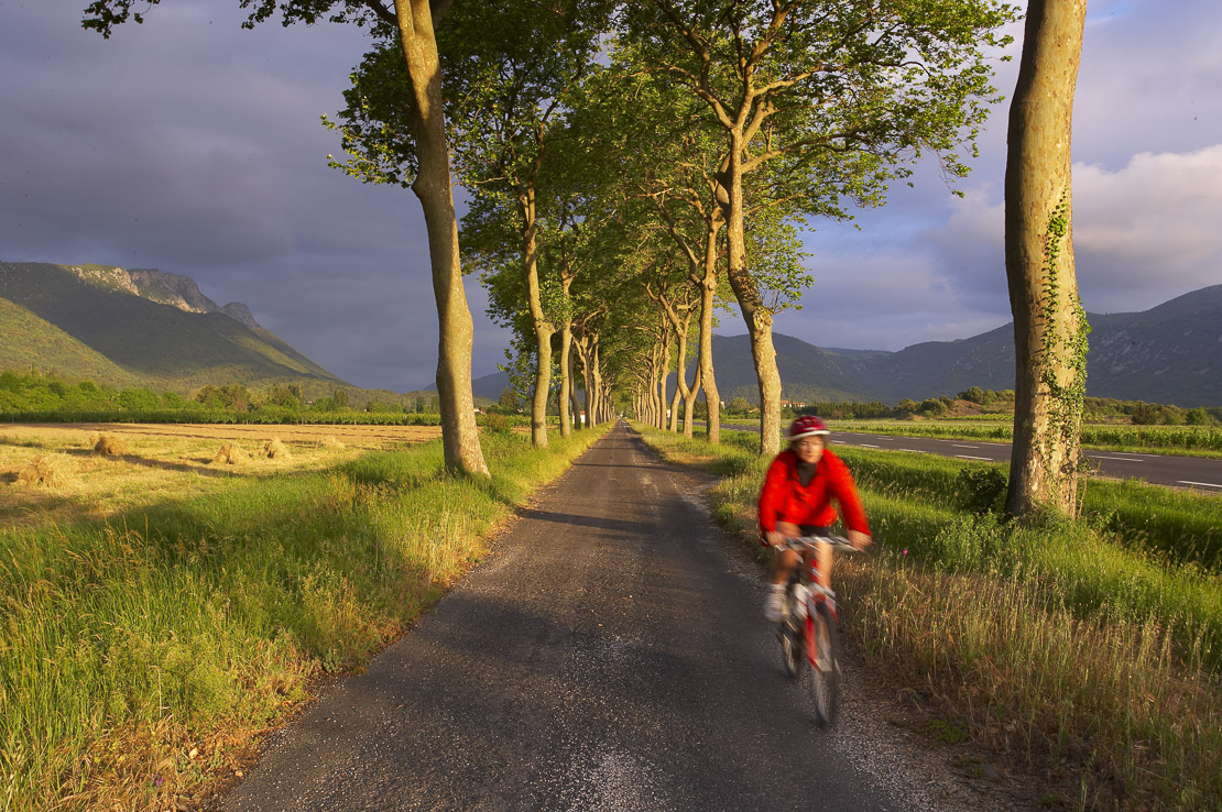 cyclist / avenue of trees, Val du Fenouillet, Languedoc, France