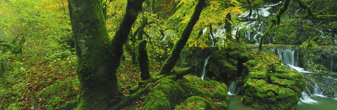 Autumnal forest stream, Lison Valley, the Jura, France