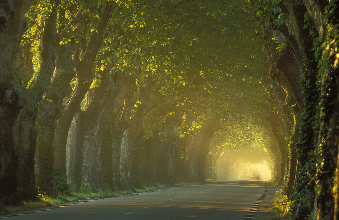 avenue of trees nr St Remy, Provence, France