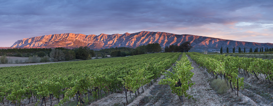 a vineyard nr Puyloubier with the Montagne Ste Victoire at dawn, Var, Provence, France