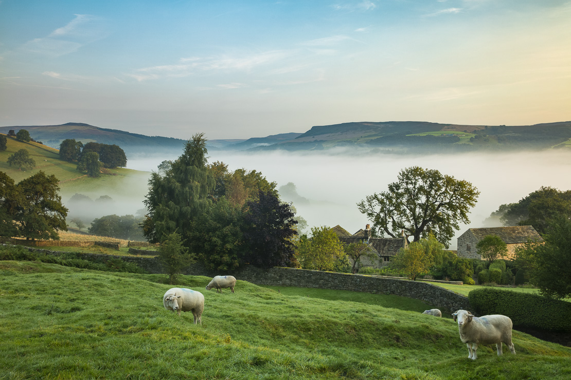 Sheep grazing near Offerton Hall above the mist in the Derwent Valley below, Derbyshire Peaks District, England, UK