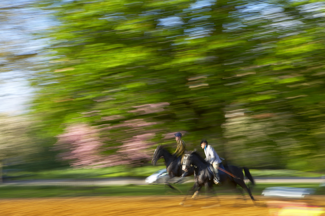 two horse riders in Hyde Park early on a spring morning, London, England, UK. (NR)