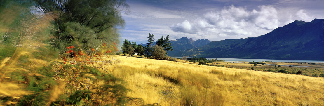 farmland in Glenorchy, South Island, New Zealand