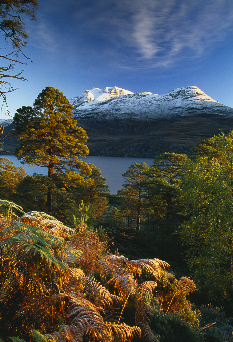 a frost tingeing the atumnal coilours at dawn on shores of Loch Maree, with Mount Slioch, Wester Ross, Scotland, UK. (NR)