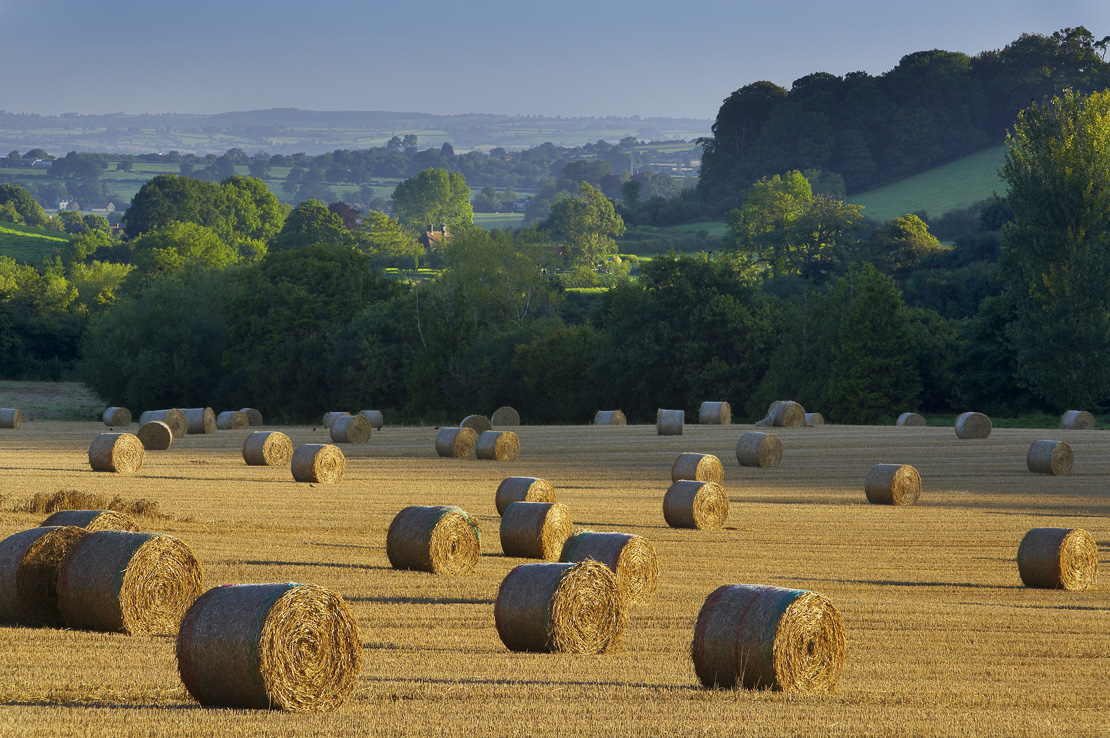 hay bales in a field near South Cadbury, Somerset, England, UK