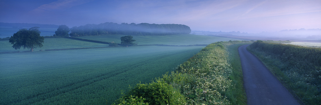 a misty country lane at dawn, nr Charlton Horethorne, Somerset, England, UK (NR)