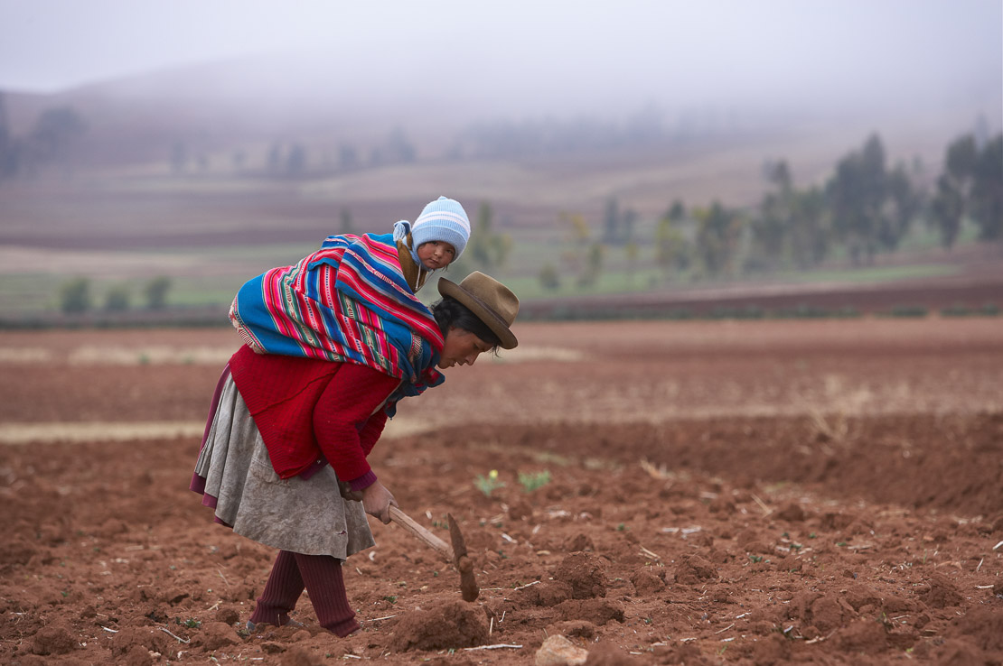 woman tilling a field and baby in the morning mist. Pampasmojo, Marras, nr Cusco, Peru