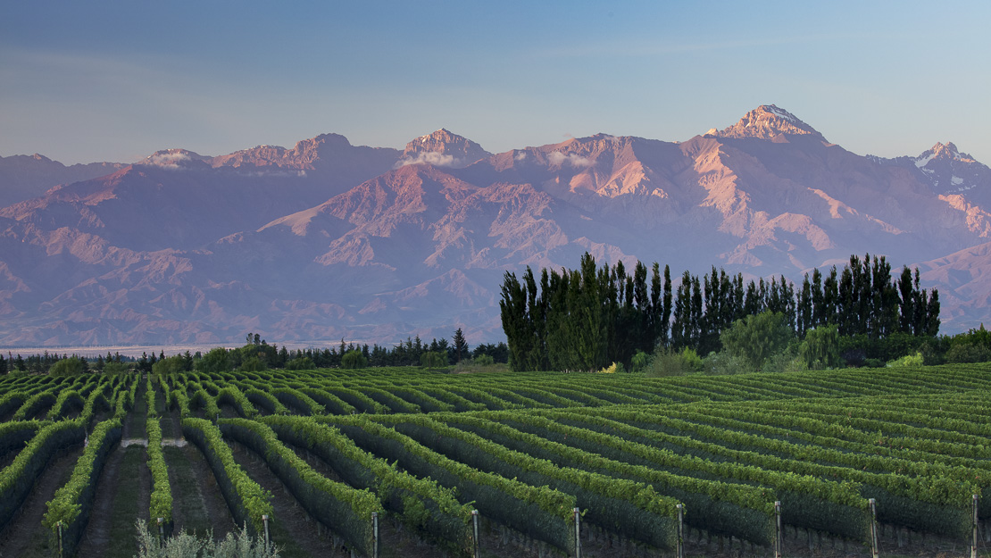 the Andes from the vineyards of the Uco Valley nr Tupungato, Mendoza Province, Argentina